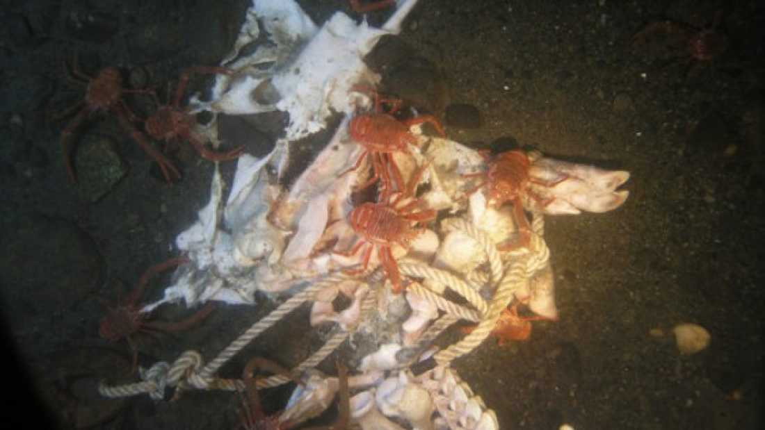 extra_large-1464358235-32-what-happens-to-a-dead-body-in-the-ocean