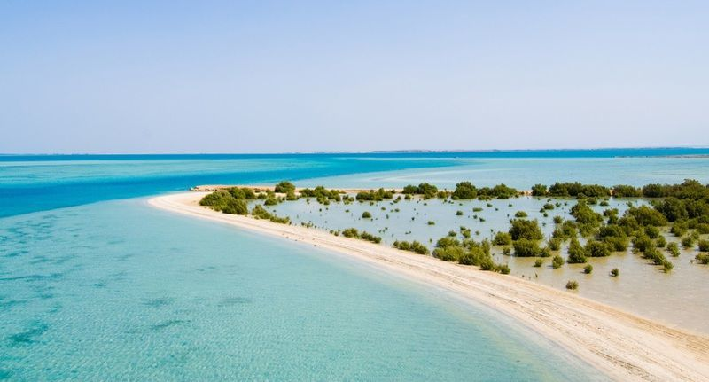 saudi-arabia-farasan-islands-mangroves